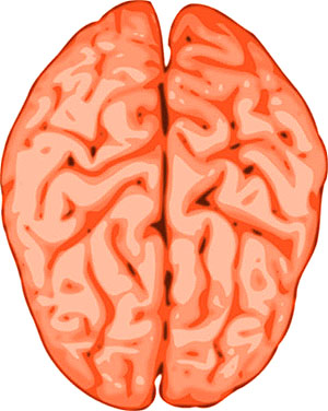Picture of the human brain with the two halves.