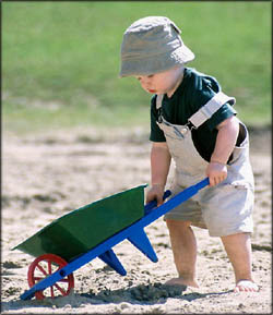 New toddler development: Little boy pushing a wheelbarrow in the sand.