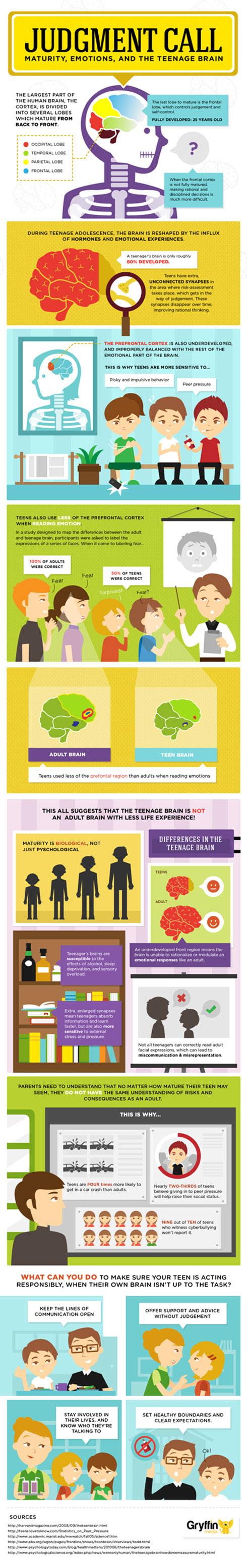 understanding the teenage brain  infographic