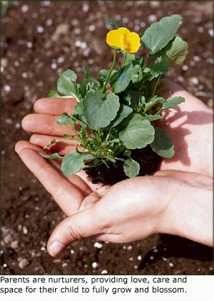 Hands holding plant with yellow flower.