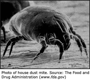 Photo of house dust mite.