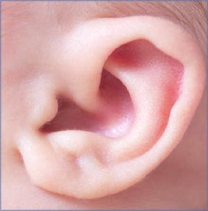 Newborn development. Close-up of baby ear.