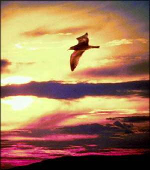 Bird flying in the evening sky as symbol of leaving the nest.