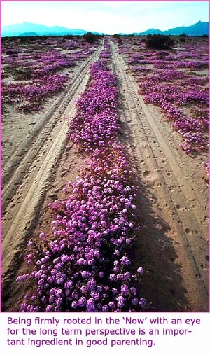 Photo of a heath or moore with purple flowers. Road track going into the far horizon.